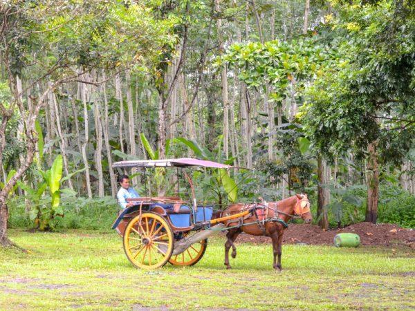 Desa Wisata Candirejo, Desa Asli Jawa Yang Eksotik